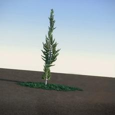 Juniper Topiary flat HiPoly 3D Model