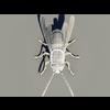 07 04 06 887 wespe wire n.6 4