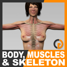 Human Female Body, Muscular System and Skeleton - Anatomy 3D Model