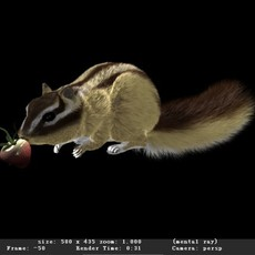 A Chipmunk or Squirrel Maya Rig and Model 3D Model