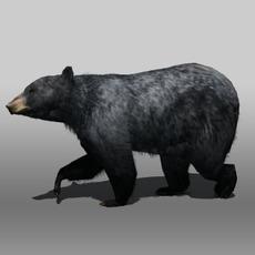 Black bear 3D Model