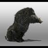 07 17 02 949 boar 4 4