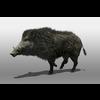 07 17 03 148 boar 2 4