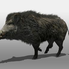 Wild Boar 3D Model