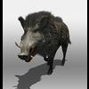 07 17 03 355 boar 1 4