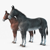 07 17 27 898 001 donkey 4