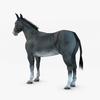07 17 28 182 002 donkey 4
