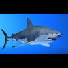 07 26 10 618 shark r01 4