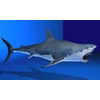 07 26 11 258 shark r04 4