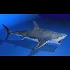 07 26 11 382 shark r05 4
