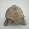 07 27 20 967 mark florquin turtle render back 4