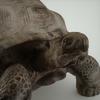 07 27 21 155 mark florquin turtle render close up 4