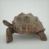 07 27 21 453 mark florquin turtle render left 4
