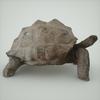 07 27 21 612 mark florquin turtle render right 4