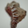 07 31 05 115 murex ramosus mark florquin sea shell 3d model render 4 4