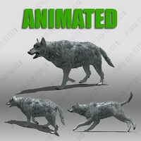 Grey Wolf Animated 3D Model