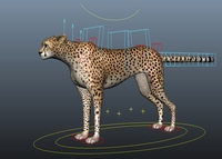 Free cheetah for Maya 1.1.3
