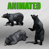 Black Bear Animated 3D Model