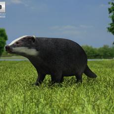 Common Badger (Meles Meles Meles) 3D Model
