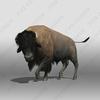 07 40 48 781 bison1 4