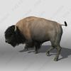 07 40 48 908 bison2 4