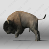 07 40 49 131 bison3 4