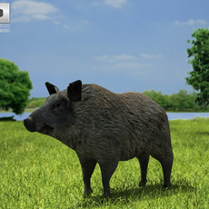 Boar (Sus Scrofa) 3D Model