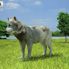 Gray Wolf (Canis Lupus) 3D Model