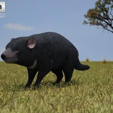 Tasmanian Devil (Sarcophilus Harrisii) 3D Model
