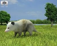 Opossum (Didelphidae) 3D Model