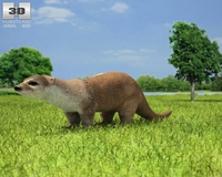 European Otter (Lutra Lutra) 3D Model