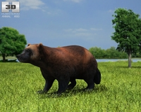 Wolverine (Gulo Gulo) 3D Model