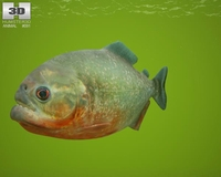Red-Bellied Piranha (Pygocentrus Nattereri) 3D Model
