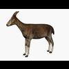 07 46 58 284 000 goat 4