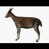 07 46 58 450 002 goat 4