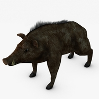 Low poly boar 3D Model