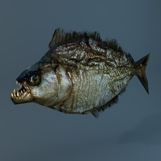 Low Poly Piranha 3D Model