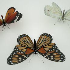 3 Butterflies 3D Model