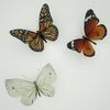 07 55 19 110 butterfly monarch 3d model scan photoreal insect mark florquin 3 4
