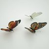 07 55 19 776 butterfly monarch 3d model scan photoreal insect mark florquin 4 4