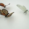 07 55 20 615 butterfly monarch 3d model scan photoreal insect mark florquin 6 4