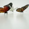 07 55 20 92 butterfly monarch 3d model scan photoreal insect mark florquin 5 4