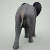 07 56 50 265 mark florquin baby elephant 3d model mammal grey 3  4