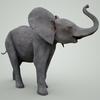 07 56 50 430 mark florquin baby elephant 3d model mammal grey 4  4