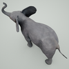 07 56 50 64 mark florquin baby elephant 3d model mammal grey 2  4