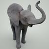 07 56 51 305 mark florquin baby elephant 3d model mammal grey 5  4
