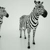 07 57 18 446 mark florquin zebra africa 3d model 3 4