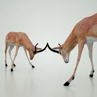 Impala 3D Model