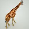 07 57 41 302 mark florquin giraffe africa 3d model 1 4