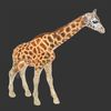 07 57 41 770 mark florquin giraffe africa 3d model 4 4